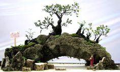 Todo mundo ama bonsais. O que muita gente não sabe é que, ao invés de comprar as mini árvores japonesas em lojas virtuais, é possível cultivá-las em casa,