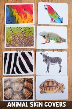 This is a Montessori inspired learning material used mainly for learning about t. Animals Images, Animal Pictures, Animal Coverings, Montessori Activities, Toddler Activities, Animal Print Wallpaper, Inspired Learning, Animal Habitats, Matching Cards