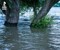 Consejos sobre donaciones para el huracán Harvey