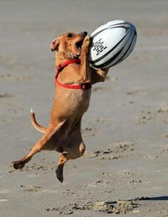 doggy with rugby ball