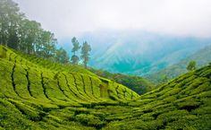 Planning A Trip To Kerala? Here's our list of top tourist places to visit in Kerala Munnar, Kerala Travel, Kerala Tourism, India Travel, Best Honeymoon Resorts, Honeymoon Destinations, Honeymoon Packages, Holiday Destinations, Tourist Places