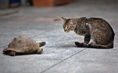Clearly this stray cat only has eyes for Selma the turtle in Istanbul on June 12, 2013.