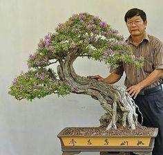 Bonsai-cuando usted piensa bonsai esto debe venir a la mente.