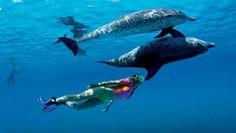 Réaliser son rêve nager avec les dauphins marineland