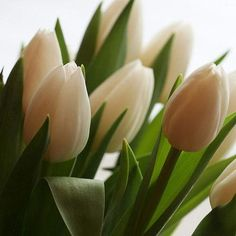 Flores blancas- tulipanes