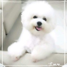 Snowy from Singapore