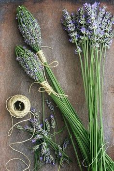 I've always loved lavender scent. Every morning very early I make my first round through the garden and always stay in front of the lavender Lavender Wands, Lavender Crafts, Lavender Scent, Lavender Blue, Lavender Fields, Lavender Flowers, Dried Flowers, Hydrangea Care, Smudge Sticks