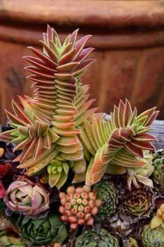 Wonderful succulents