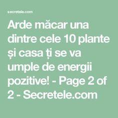 Arde măcar una dintre cele 10 plante și casa ți se va umple de energii pozitive! - Page 2 of 2 - Secretele.com