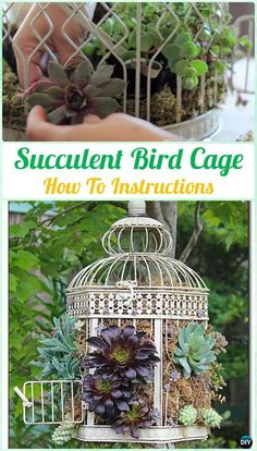 DIY Indoor Outdoor Succulent Garden Ideas Projects DIY Succulent Bird Cage Instruction- DIY Indoor Succulent Garden Ideas Projects This image … - therezepte sites Succulent Gardening, Garden Planters, Planting Succulents, Organic Gardening, Gardening Tips, Succulent Garden Ideas, Succulent Wall Planter, Kitchen Gardening, Succulent Wreath