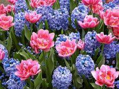 Spring dream.