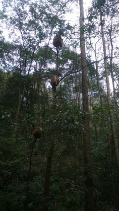 Monos trepando