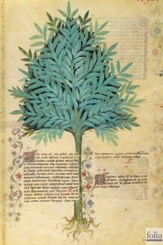 On Plants — Viewer — World Digital Library Medieval Manuscript, Medieval Art, Illuminated Manuscript, Illustration Botanique, Illustration Art, Illustrations, Botanical Drawings, Botanical Prints, Tree Of Life Art