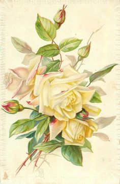pale yellow roses & buds, stalks lower left