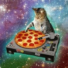 f8f1eeeb5805 104 Best GALAXY CAT images