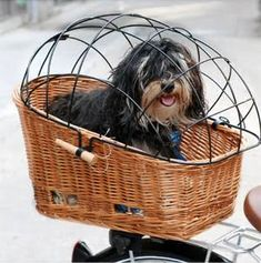 Dog getting a ride in a wire covered basket on the back of a bike.no jumping out of the basket for him Dog Bike Basket, Bike Baskets, Dog Breeds Little, Biking With Dog, Cool Dog Houses, Dog Carrier, Pet Carriers, Dog Crate, Dog Grooming