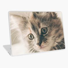 Promote | Redbubble Studio, Cats, Animals, Design, Gatos, Animales, Animaux, Studios, Cat