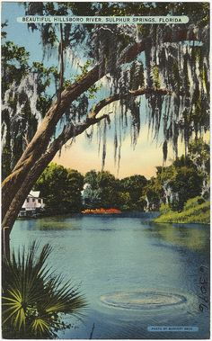 Beautiful Hillsboro River, Sulphur Springs, Florida