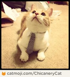 He's a business man! <3 By ChicaneryCat http://cmji.me/19UHxHd