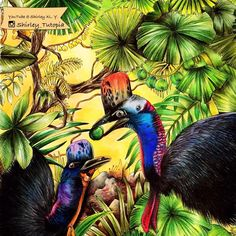 Cassowaries in the rainforest 🦃🦃🦃 Video has posted on my channel👉🏻@Shirley_Tutopia ❤️ Coloringbook 📗#exotischerurwald by @goodwivesandwarriors 😘  #rainforest #cassowary #daintree #coloriage #exoticjungle #coloring #coloringbooks #colouringforadults #colouringforgrownups #colouringpencils #coloringbookforadults #adultcoloring #adultcolouring #adultcoloringbook #prismacolor #coloredpencil #shirleytutopia #coloringbook #coloringtherapy #coloringpencils
