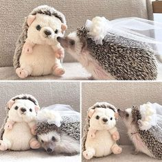 Breathtaking 24 A cute little hedgehog https://meowlogy.com/2018/02/03/24-cute-little-hedgehog/ Depending upon your tastes, you can elect for the game