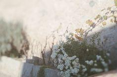 Freelensed Flowers
