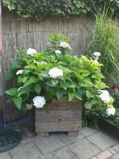 hortensia in bak gemaakt van palletplanken
