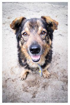 Luki pies do adopcji ze Schroniska w Koninie