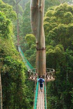 Висячие мосты на острове Борнео, Филиппины