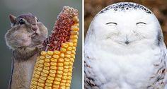 Gördüğünüz Anda Yüzünüzde Gülümsemeler Yaratacak 2016 Yılının En Komik 35 Hayvanı