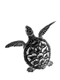 🐢❤ Beautiful black and white photo. Turtle Sketch, Tortoise Tattoo, Sea Turtle Pictures, Marquesan Tattoos, Turtle Love, Black Tattoos, Tribal Tattoos, Tattoo Sketches, Big Tattoo