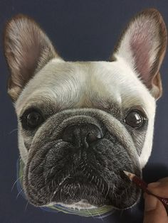 Piggy The French bulldog - Frenchie. Animals Translated to Realistic Drawings. By Ivan Hoo.