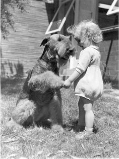 Airedale terrier or similar with a sweet little girl (in an adorable outfit! Airedale Terrier, Fox Terriers, Chien Fox Terrier, Wire Fox Terrier, Welsh Terrier, Dog Photos, Dog Pictures, Animal Pictures, Animals For Kids