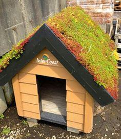 Garden Sheds Rona garden shed - rona | garden shed ideas | pinterest | gardens