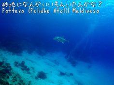 Fotteyo(Felidhe Atoll) Maldives