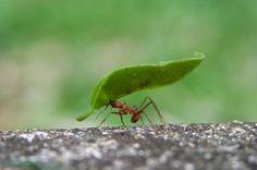 Type Of Ants