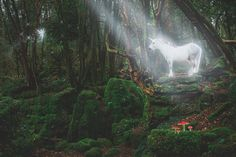 Magical Unicorns at Puzzlewood by Jenny Giles Photography