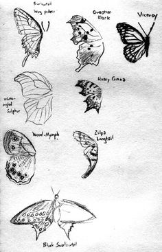 Drawings Of Roses And Butterflies | Jordan Greywolf's Gallery - Sketches