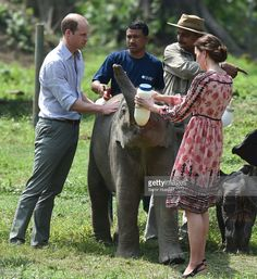 Catherine, Duchess of Cambridge and Prince William, Duke of Cambridge feed baby elephants during a visit to the Centre for Wildlife Rehabilitation and Conservation at Kaziranga National Park on April 13, 2016 in Guwahati, India.