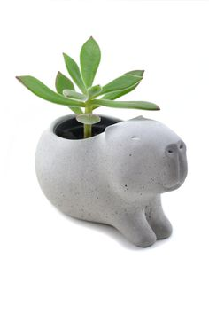 Cute concrete capybara planter/ vase for succulent plants - gray