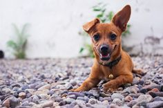 Discover what pet-friendly Alexandria, VA, has to offer. Discover our luxurious, pet-friendly apartments in the heart of Alexandria! Pet Friendly Apartments, Diy Dog Toys, Weird Facts, Strange Facts, Animal Facts, Dog Hacks, Dog Crate, Dog Quotes, Best Dogs