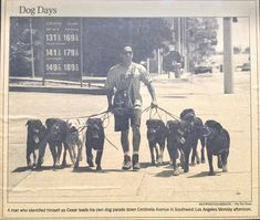 This LA Times picture of the then unknown Cesar Millan, walking a pack of dogs, led to the interview that changed his life.  When the reporter asked what he ultimately wanted to do he said he wanted to have a television show.  The rest is history.   (This pic also was used for a billboard by the LA Times, but they cut it off so you couldn't see his face so they wouldn't have to pay him).