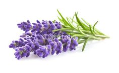 Lavender flowers