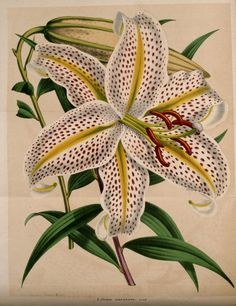 https://ia801703.us.archive.org/BookReader/BookReaderImages.php?zip=/1/items/labelgiquehorti131863morr/labelgiquehorti131863morr_jp2.zip&file=labelgiquehorti131863morr_jp2/labelgiquehorti131863morr_0068.jp2&scale=2&rotate=0