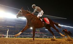 California Chrome won the 2016 Dubai World Cup by four lengths with his girth clear back near his flank! It slipped during the race. SO impressive... for both horse AND rider!! Victor Espinoza is amazing and California Chrome is magnificent.
