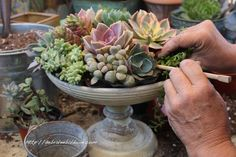 How to Make a Succulent Centerpiece