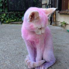Pink Kitty.