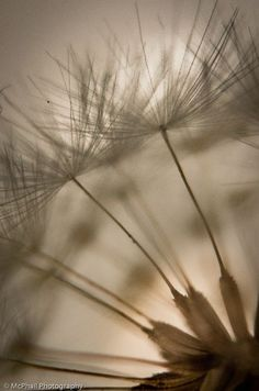 Photo by billmcphail Dandelion, Community, World, Flowers, Plants, Photography, Inspiration, Image, Biblical Inspiration