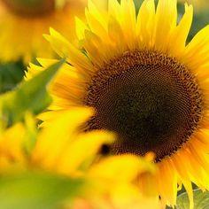 Schöne Woche ausm ARLBERG-well.com Anton, Wellness, Dandelion, Spaces, Flowers, Plants, Nice Asses, Dandelions, Plant
