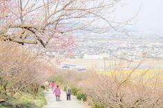 桜 Outdoor, Outdoors, The Great Outdoors